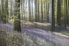 Abstrakte Bäume im Wald Lizenzfreies Stockfoto