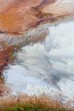Abstrakte Bakterien von grasartigen Frühlingen Lizenzfreies Stockfoto