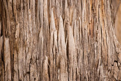 Abstrakte Barkenbeschaffenheit Karri Tree Australia Lizenzfreie Stockbilder