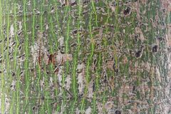 Abstrakte Baumbarke Stockfoto