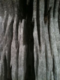 Abstrakte Baumstammphotographie Lizenzfreie Stockbilder
