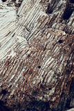 Abstrakte Beschaffenheit bildete sich durch das Detail eines Weiß Lizenzfreies Stockfoto