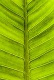 Abstrakte Beschaffenheit der Blätter Geschaffen durch natürliches Stockfoto