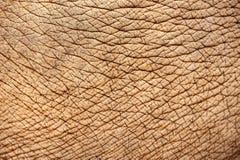 Abstrakte Beschaffenheit der Elefanthaut Lizenzfreie Stockbilder