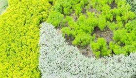 Abstrakte Beschaffenheit des grünen Grases mit den weißen und gelben Blumen Stockbild