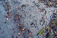 Abstrakte Beschaffenheit des Sandes auf dem Ufer des Sees zerstreute colo stockfoto