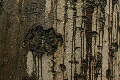 Abstrakte Beschaffenheit eines Baumstammes lizenzfreies stockfoto