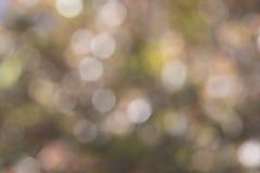 Abstrakte Beschaffenheiten: Natürliches Laub als unscharfes mehrfarbiges Boke Stockbild