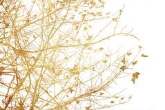 Abstrakte Beschaffenheiten und Hintergründe der Blume Stockbilder