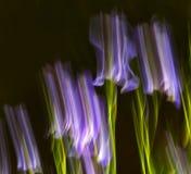 Abstrakte Bewegungsunschärfe-Blumen Stockfoto