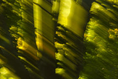 Abstrakte Bewegungsunschärfe-Sonnenlicht-Bäume stockfoto