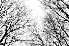 Abstrakte blattlose Baumaste im Winter Lizenzfreies Stockfoto