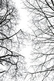 Abstrakte blattlose Baumaste im Winter Stockbilder