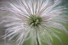 Abstrakte Blume Lizenzfreies Stockfoto