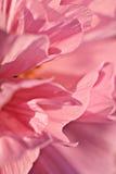 Abstrakte Blume Stockfotos