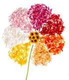 Abstrakte Blume auf weißem Hintergrund Stockfoto