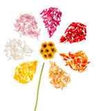 Abstrakte Blume auf weißem Hintergrund Lizenzfreie Stockfotografie