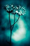 Abstrakte Blumen Lizenzfreie Stockfotos
