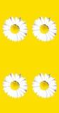 Abstrakte Blumen-Szene Lizenzfreie Stockbilder
