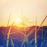 Abstrakte Blumen und Anlagen im Sonnenuntergang Lizenzfreie Stockfotos