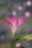 Abstrakte Blumenauslegung der einzelnen Blüte mit den Knospen Lizenzfreies Stockbild