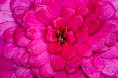 Abstrakte Blumenblätter der rosa Blume Lizenzfreie Stockfotografie