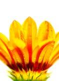 Abstrakte Blumenblumenblätter Stockfotos
