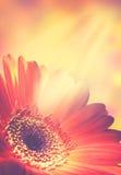 Abstrakte Blumenhintergründe Lizenzfreies Stockbild