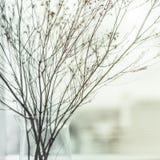 Abstrakte Blumenniederlassung Stockfotografie
