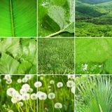 Abstrakte Collage der Naturfotos Lizenzfreie Stockbilder