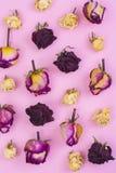 Abstrakte Collage und Hintergrund von getrockneten rosafarbenen Blumen auf Pastell Stockfotografie