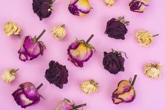 Abstrakte Collage und Hintergrund von getrockneten rosafarbenen Blumen auf Pastell Lizenzfreie Stockfotografie