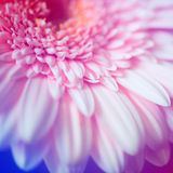 Abstrakte Daisy Flower Background Blumen gemacht mit Farbfiltern Lizenzfreies Stockfoto