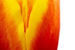 Abstrakte Details von roten, gelben und orange Tulpenblumenblumenblättern in der V-Form unter hoher Nahaufnahme der linearen Wied lizenzfreies stockfoto