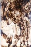 Abstrakte dunkelbraune Zahlen der Tinte im Wasser Stockfotos
