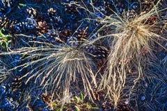 Abstrakte Fotografie mit outsole auf Gras und Blättern Lizenzfreie Stockfotos