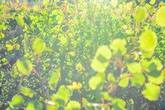 Abstrakte Fotografie mit outsole auf Gras und Blättern Stockfoto