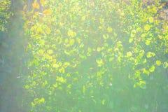 Abstrakte Fotografie mit outsole auf Gras und Blättern Stockfotografie