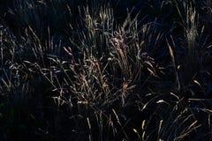 Abstrakte Fotografie mit outsole auf Gras und Blättern Lizenzfreies Stockfoto
