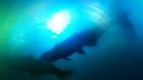 Abstrakte Fotos innerhalb der verwischten Aquarium Fotozusammenfassung summen laut Viele Farben Lizenzfreie Stockbilder