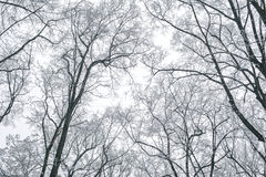 Abstrakte gefrorene Baumaste Weiße Schneeflocken auf einem blauen Hintergrund Stockbilder