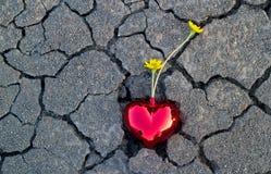 Abstrakte gelbe Blumen im roten Herzen formen auf Sprungsgrundnatur Stockbilder
