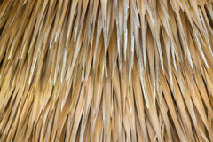 Abstrakte Gelbe trocknen von der Baumpalmblattbeschaffenheit und Lizenzfreies Stockbild