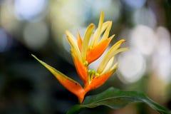 Abstrakte gelbe und orange Blume Stockbilder