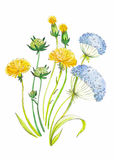 Abstrakte gezeichneter Hintergrund der Aquarellkunst Hand mit gelbem Löwenzahn Auch im corel abgehobenen Betrag Stockfoto