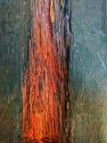Abstrakte hölzerne heiße Farbe Lizenzfreies Stockfoto