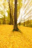 Abstrakte Herbstbäume lizenzfreies stockbild
