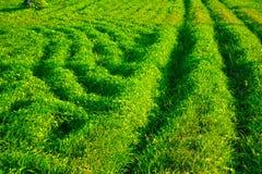Abstrakte Hintergrundlandschaftsgrünes Gras mit Sonnenlicht stockfoto
