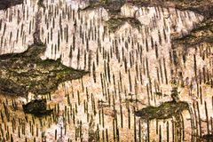 Abstrakte Muster in der Natur lizenzfreie stockbilder