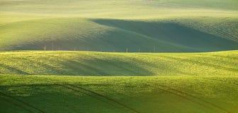 Abstrakte Musterbeschaffenheit von gewellte Felder im Frühjahr rollen Sprin Lizenzfreie Stockfotos